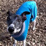 Albie in their lurcher fleece coat from Milgi Coats