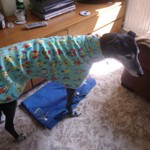 Carmen the greyhound wearing an Owls Fleece Coat from MilgiCoats