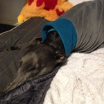 Charcoal and Teal Greyhound Fleece Coat