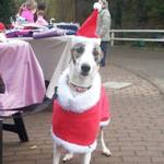 Christmas-Fleece-Coats-for-Dogs-1