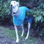 Dante in his teal and grey Milgi Coat