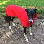 Floyd wearing his red greyhound coat from milgi coats