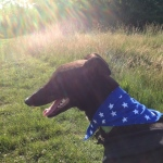 Greyhound Bandana Blue Star