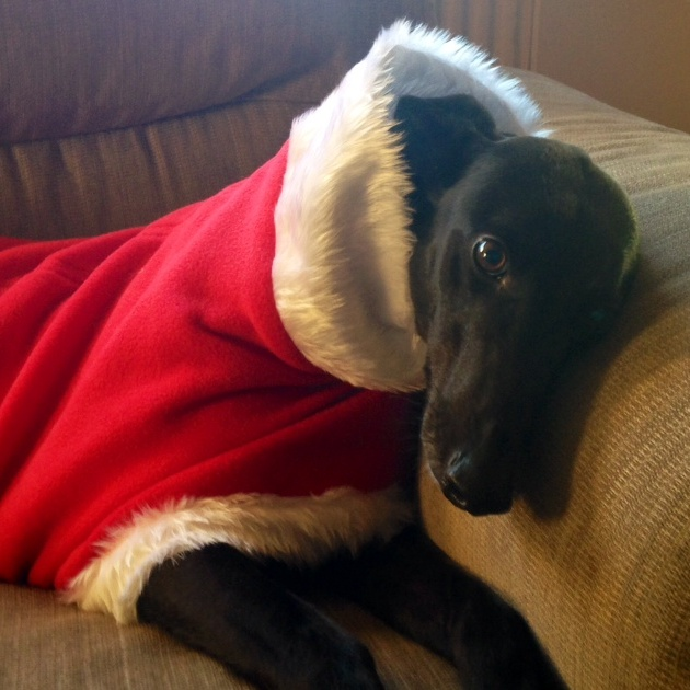 Greyhound Father Christmas Fleece Coat