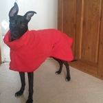 Greyhound Fleece Coat in Bright Red Fleece