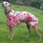 Greyhound Raincoat from Milgi Coats