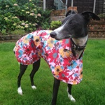 Greyhound Raincoat from MilgiCoats
