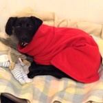 Hebe wearing her red milgi fleece coat