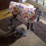 Maggie May wearing a Rainbow Hearts Fleece Coat from Milgi Coats