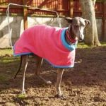 Meri in their greyhound fleece coat from Milgi Coats