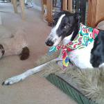 Milgi Coats - Sally wearing her Magic Circles Bandana