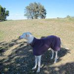 MilgiCoats Bailey Greyhound Fleece