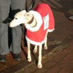 MilgiCoats Benny Greyhound Fleece Coat 1