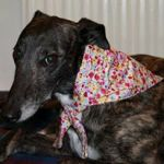 Milgi Coats - Chloe wearing a Summer Flowers Bandana