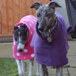 MilgiCoats Honey and Layla Greyhound Coat