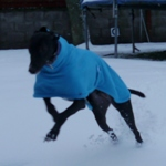 MilgiCoats Ozzy Greyhound Coat 3