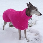 Milgi Coats - Pip wearing a fleece coat in the snow