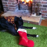 MilgiCoats Sprocket Greyhound Stocking and Bandana