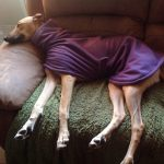 Fleece Coat for Sighthounds in Purple Fleece Fabric