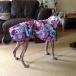 Raincoats for Greyhounds in Purple Haze Ripstop Fabric
