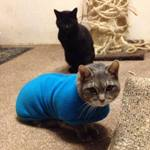 Smokey the Cat in a Milgi Fleece Coat