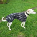 Walking coat for sighthounds in skulls cotton fabric
