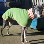 apple stripes lurcher coat modelled by dylan
