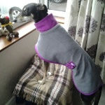 bespoke dog coat in charcoal purple