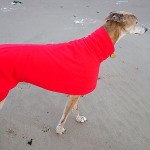 bright red greyhound fleece coat