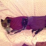Carrie and Erin in their lurcher fleece coats from Milgicoats