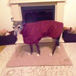 Carrie in her lurcher fleece coat from Milgicoats