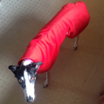 daisy-in-her-red-fleece-coat-from-milgicoats