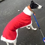father christmas dog coat from milgicoats modelled by noddy