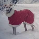 father christmas dog coat