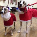 father christmas fleece coat for whippets