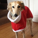 father christmas greyhound coat worn by harrie