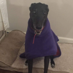frieda in purple greyhound fleece coat