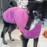 fuchsia and charcoal lurcher fleece coat