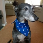 greyhound bandana modelled by jake