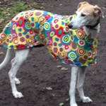 greyhound coat in magic circles design from milgi coats