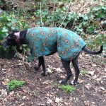 greyhound coat in peacock design from milgi coats