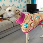 greyhound coat in woodland creatures with fuchsia design