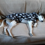 greyhound fleece coat by milgi coats in skulls design modelled by worzel