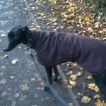 greyhound fleece coat in chocolate brown modelled by sam