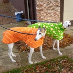 greyhound fleece coat in ducks orange design