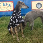 greyhound-fleece-coat-in-skulls-design-from-milgicoats