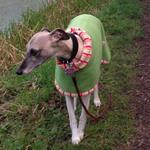 greyhound fleece coat modelled by elsie