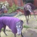 Greyhound Fleece Coats in Imperial Purple and Chocolate Brown