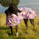 greyhound raincoat in purple haze fabric
