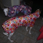greyhound raincoats waterproof coats